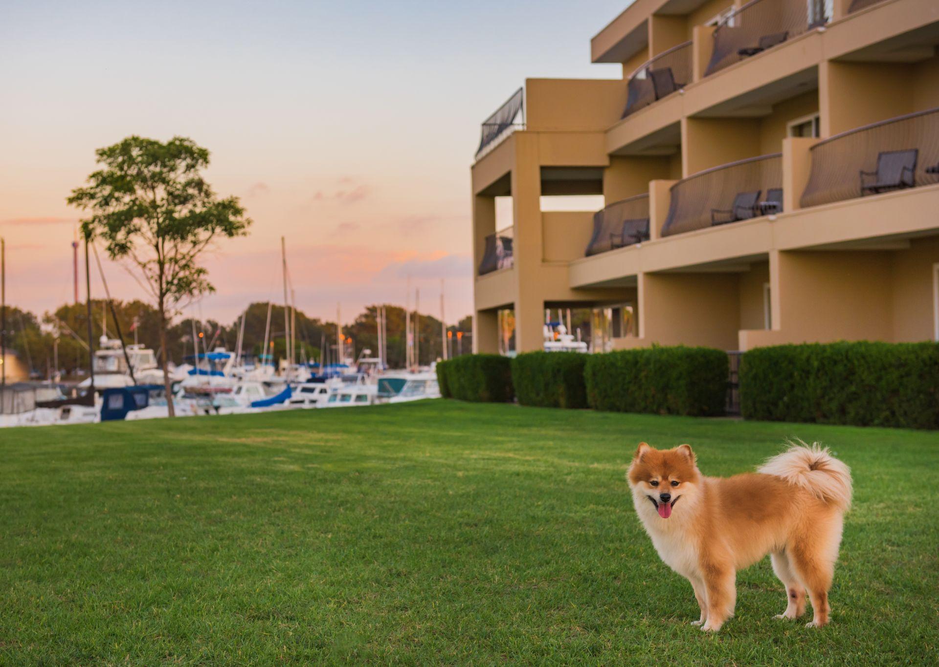 Pet Friendly Hotel San Diego The Dana On Mission Bay